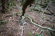 White ruban in Aokigahara, usually known as suicide forest. Ruban is used to mark the way back in case people changed mind.