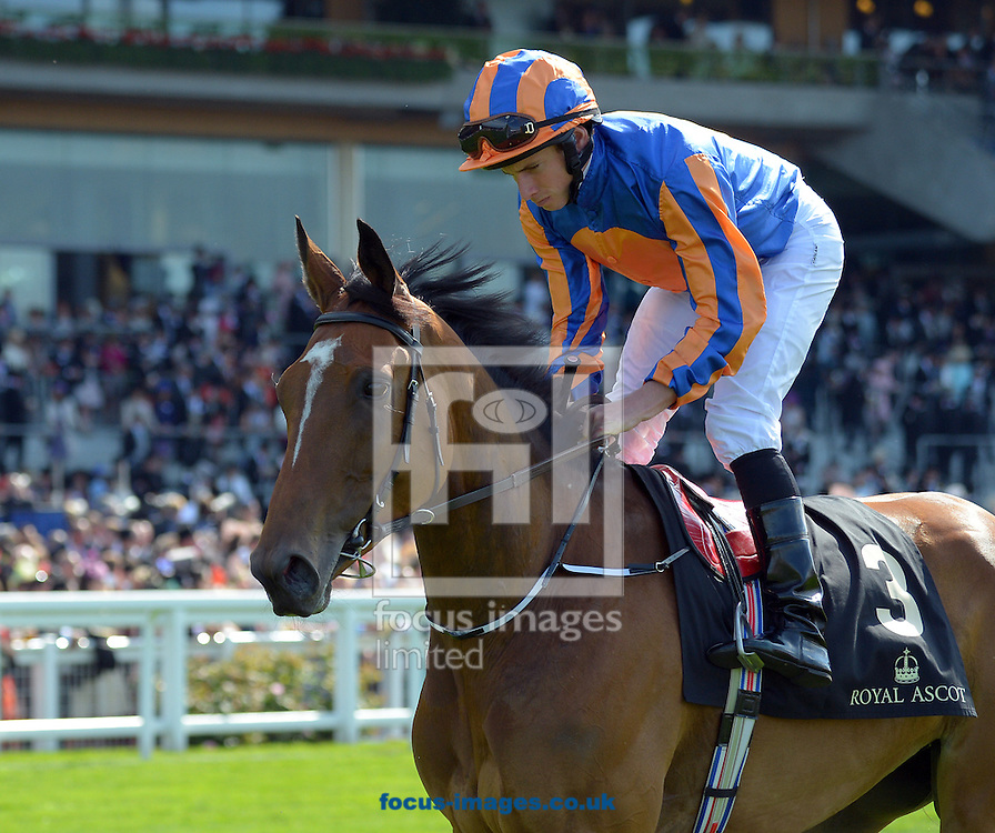A preview of this weekend's favourites in UK racing.<br /> Picture by Martin Lynch/Focus Images Ltd 07501333150<br /> 13/10/2016<br /> <br /> <br /> Original Caption:<br /> Found at Royal Ascot 19-6-15.