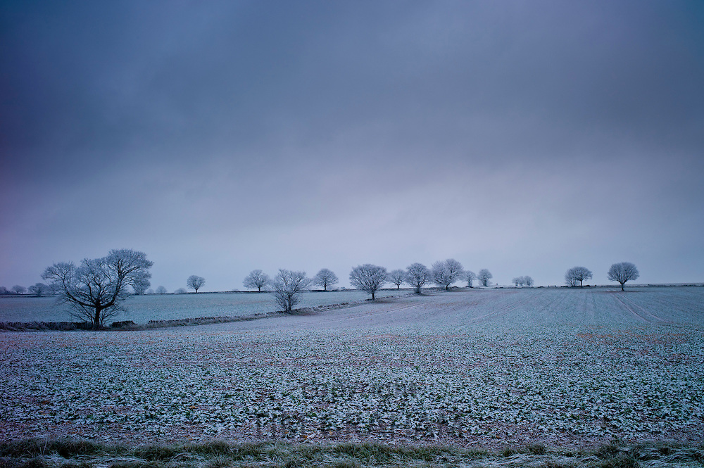 Hoar frost on trees and fields in wintry landscape in The Cotswolds, Oxfordshire, UK