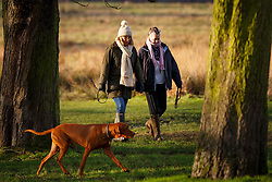 © Licensed to London News Pictures. 13/01/2016. London, UK. People running and walking their dogs in Richmond Park in London at sunrise following one of the coldest nights in a year as temperatures in the capital drop as low as -1C on Wednesday, 13 January 2016. Photo credit: Tolga Akmen/LNP