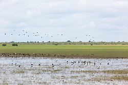 Birds flock to a floodplain in the wet season on Liveringa Station in Western Australia's Kimberley.