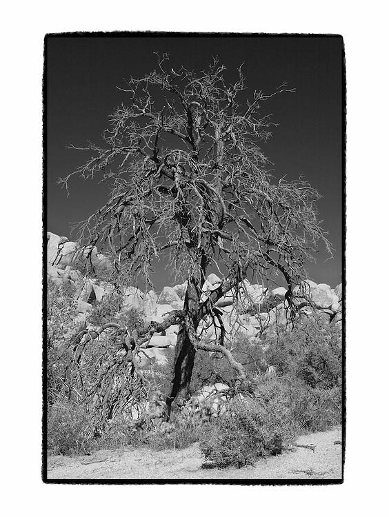 Desert Oak - Black & White - Artist Designed Custom Border