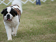 Hickories Circuit Dog Show