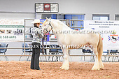 09. STALLIONS WEANLING/YEARLING