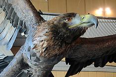 Wellington-Hobbit eagles fly into Wellington airport