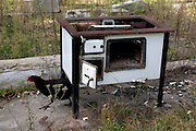 Discarded Polish wood burning cookstove and free range rooster at farm.  Zawady   Central Poland