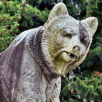 Bear Statue at Bernisches Historisches Museum in Bern, Switzerland <br /> You will see several statues of bears throughout Bern, Switzerland, like this one near the entrance of the Bernisches Historisches Museum.  The bear became the town's namesake in 1191 and has been their symbol since the 16th century.  Live bears used to reside in a pit called Bärengraben until the BärenPark or Bear Park was built for them along the River Aare in 2009.