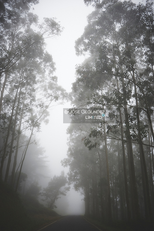 A fog road in the forest