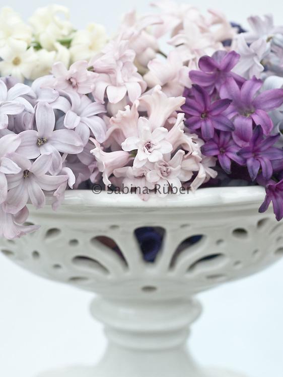 Hyacinthus orientalis 'Miss Saigon' and H. 'Prince of Love'
