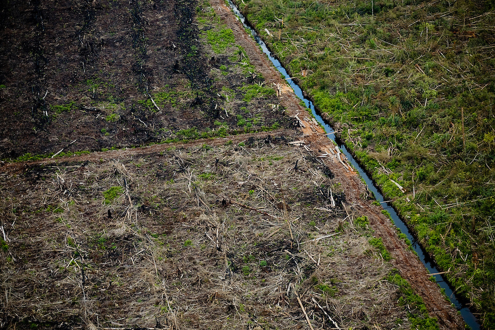 Peat land forest and destruction in Kerumutan region, Sumatra, Indonesia, Aug. 30, 2008..Daniel Beltra/Greenpeace