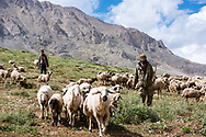 Munzur Mountains, Turkey - July 21, 2014 - Shepherds drive their flock in the high meadows of the Munzur Mountains. CREDIT: Michael Benanav for The New York Times
