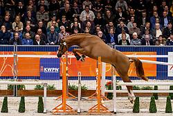 014, Goubet D'Arvor<br /> KWPN Hengstenkeuring - 's Hertogenbosch 2019<br /> © Hippo Foto - Dirk Caremans<br /> 31/01/2019