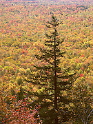 high above the forest, the view from owls head lookout, green mountain national forest, groton, vermont, is incredible. no property release