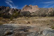 Mendoza Canyon, Coyote Mountains Wilderness Area, Sonoran Desert, Arizona, USA,