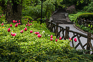 Central Park-Rustic fences
