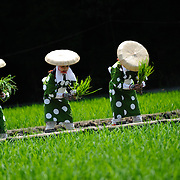 Female rice planters known as saotome perform during Oodaka-saiden Otaue-sai, a rice planting ceremony at Hikamianeko Shrine in Nagoya, Japan.