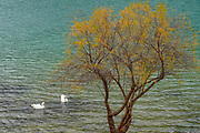 Lone tree with a calm lake in the background. Photographed on Crete, Greece in May