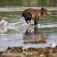 Alaska Katmai Coast Shoot
