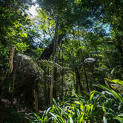 """Floresta (paisagem) fotografado em Linhares, Espírito Santo -  Sudeste do Brasil. Bioma Mata Atlântica. Registro feito em 2015.<br /> <br /> <br /> <br /> ENGLISH: Forest Landscape photographed in Linhares, Espírito Santo - Southeast of Brazil. Atlantic Forest Biome. Picture made in 2015."""