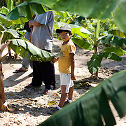 Bolivia. Copacobana. A boy stands within the plantain trees of the camellones