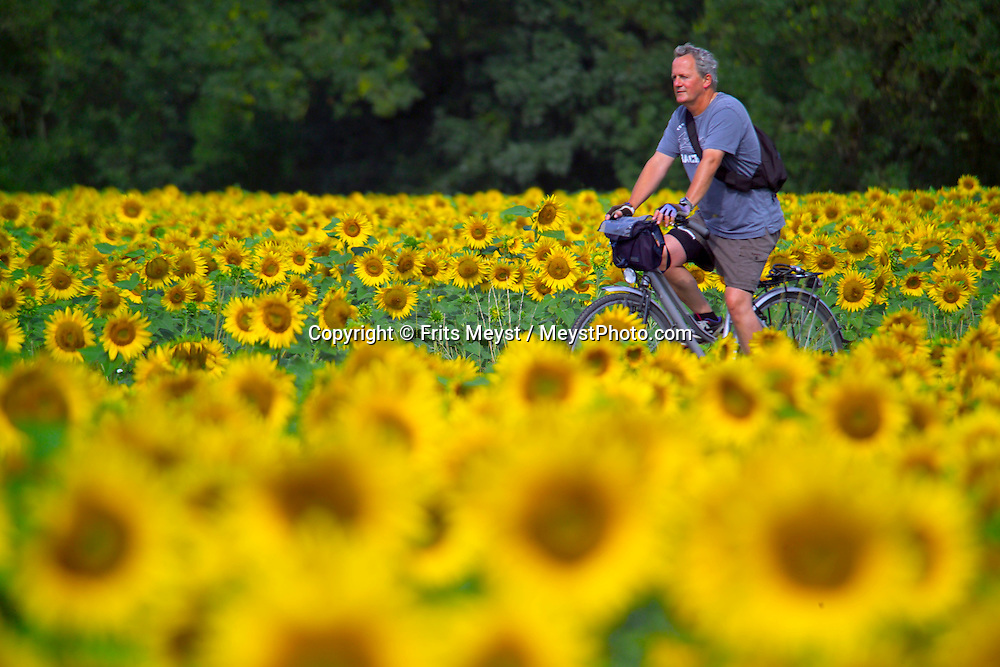 Tours, Loire, France, July 2006. The best way to experience the Loire region is by bike. The 'Loire a Velo' trail leads through ancient villages with medieval castles, fields of wheat and sunflowers, vineyards and wine producers in the region. Photo by Frits Meyst/Adventure4ever.com