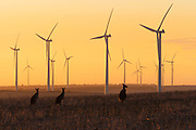 Walkaway Wind Farm near Geraldton WA, Site Manager is Carsten Johansen. Photo By Craig Sillitoe This photograph can be used for non commercial uses with attribution. Credit: Craig Sillitoe Photography / http://www.csillitoe.com<br />