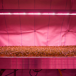 London, UK - 21 February 2014: the Zero Carbon Food - Growing Underground