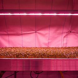 London, UK - 21 February 2014: the Zero Carbon Food - Growing Underground
