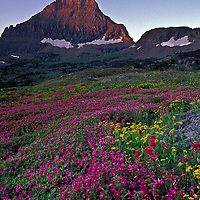 Mount Reynolds and wildflowers. Logan Pass area, Glacier National Park, Montana.