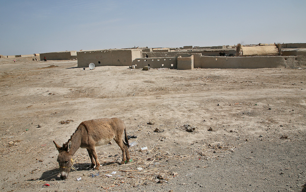 Barren landscape in Rota Village, in what used to be the Iraqi Marshlands, in Basrah Province.