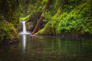 USA, Oregon, Hood River County. Punch Bowl Falls along Eagle Creek in the Columbia River Gorge.