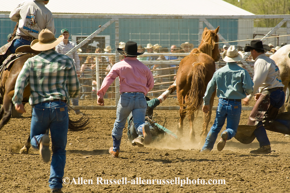 Rodeo, Bareback Bronc rider with hand hung up in saddle being drug, pick up men and friends come to help, Miles City Bucking Horse Sale, Montana.