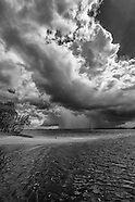 Florida Forever Glades Black & White