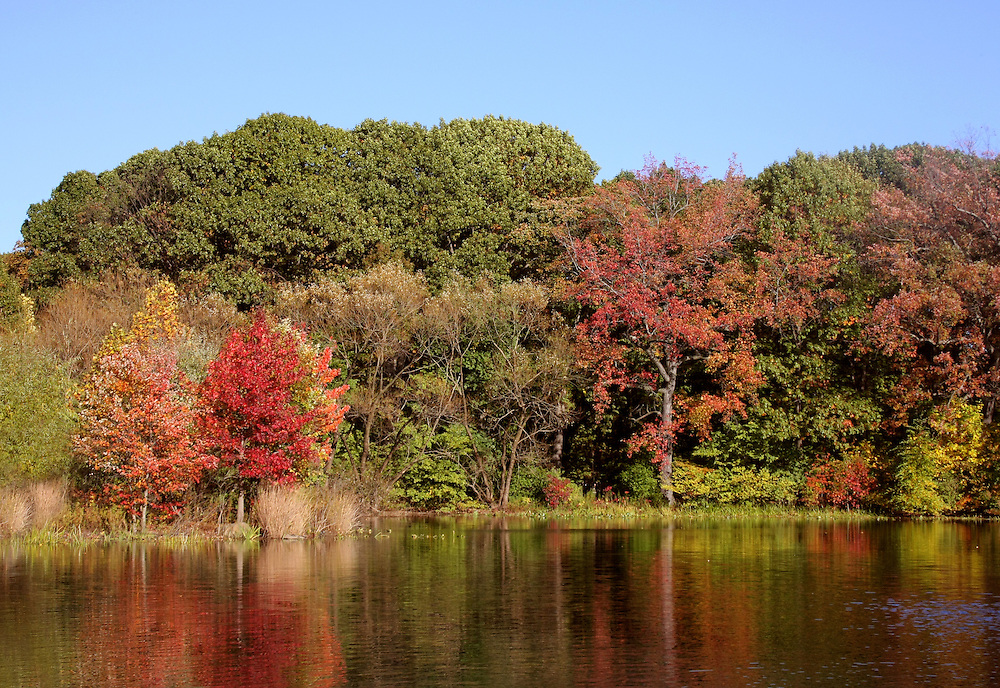 Fall colors at Prospect Park's Upper Pool. 2008.