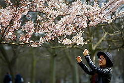 © Licensed to London News Pictures. 05/04/2016. London, UK. People getting their pictures taken with cherry blossoms whilst enjoying sunshine and warm weather in St James's Park, London on Tuesday, 5 April 2016. Photo credit: Tolga Akmen/LNP