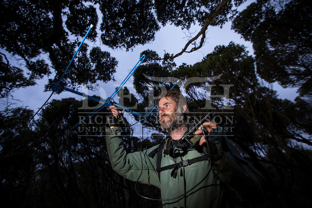 Chris Muller Massey University wildlife biologist tracks Yellow Eyed Penguins that have been attached with radio transmitters to help locate their elusive nests in the Sothern Rata forest at Enderby Island in the subantarctic Auckland Islands archipelago, New Zealand.<br />  06 January 2016<br /> Photograph Richard Robinson &copy; 2016