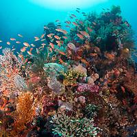 Healthy reef scene, Komodo Island, Indonesia.