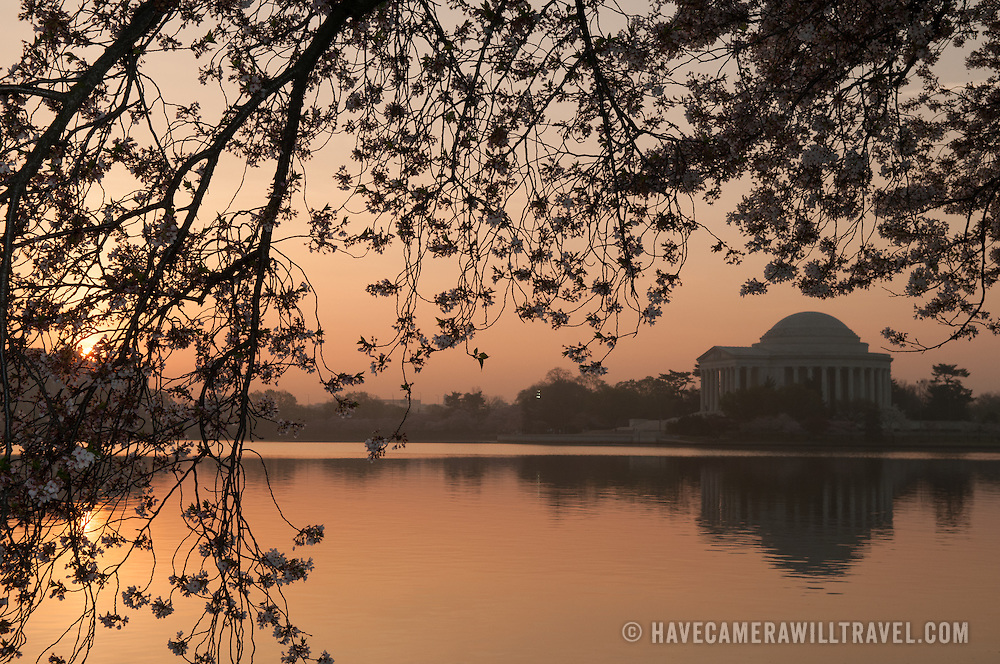 The rising sun silhouettes the cherry blossom branches and the Jefferson Memorial at sunrise.