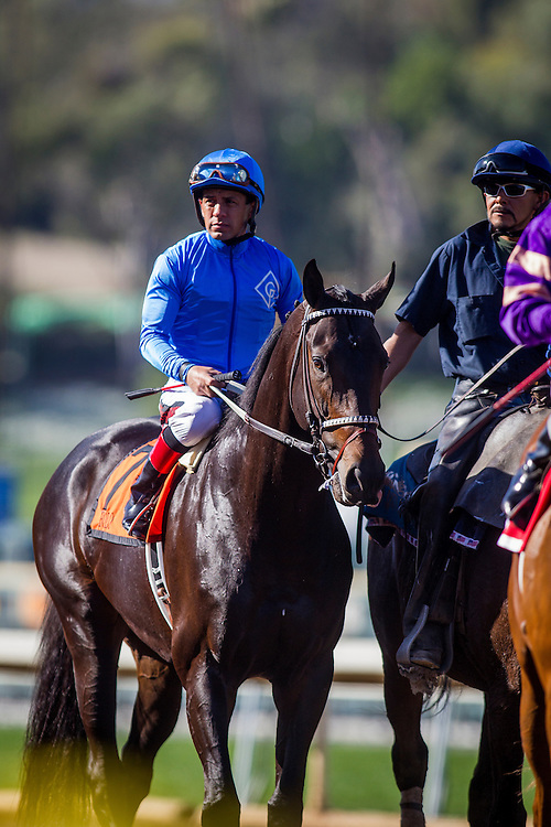March 07 2015: Bolo races in the San Felipe Stakes at Santa Anita Park in Arcadia CA. Alex Evers/ESW/CSM