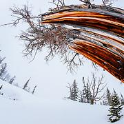 Kim Havell skis blower powder in the Teton backcountry near Jackson Hole Mountain Resort in Teton Village, Wyoming