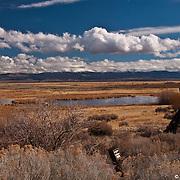 Carson Valley Dragon