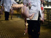 © Licensed to London News Pictures. 21/12/2012. Reading, UK A worker carries birds into the auction. Auction house Thimbleby and Shorland holds its annual traditional christmas poultry sale today 21st December 2012 in Reading, Berkshire. Over 500 lots of fresh turkeys, chickens, geese and duck, all oven ready and rough plucked were available for sale. The general public in the UK are reported  to spend over 300 million GBP on turkey over the Christmas season.. Photo credit : Stephen Simpson/LNP