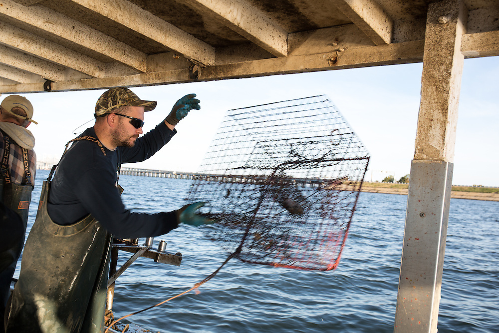 Ryan Ribb throws an empty crab trap back into the water | October 11, 2015