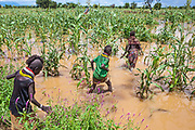 Young village girls wade into an agricultural plot inundated by unseasonal heavy rains.