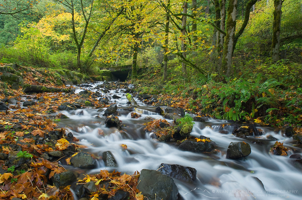Wahkeena Creek in Fall, Columbia River Gorge National Scenic Area Oregon