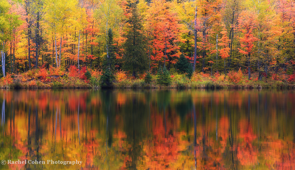 &quot;Lake Plumbago Dream&quot;<br />