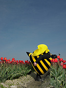 Man in Bee costume bending over to smell tulips