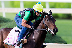 Oaks 142 hopeful Carina Mia worked during raining, Monday, May 02, 2016 at Churchill Downs in Louisville.