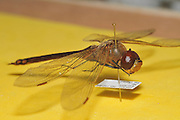 Israeli Insect collection of different species - insects collected in Israel