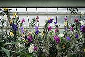 Orchid Festival Kew